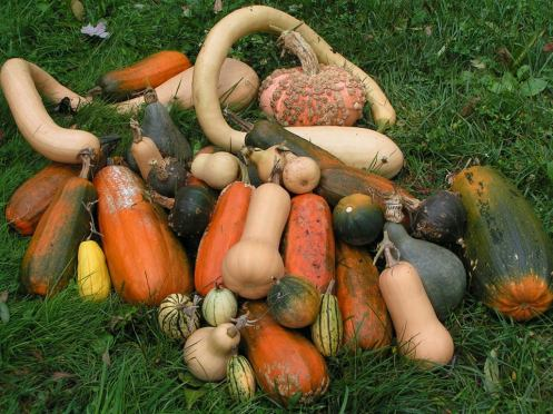 fall-harvest2